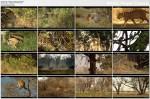 Lamparty z Dead Tree Island / Leopards Of Dead Tree Island (2010) PL.TVRip.XviD / Lektor PL